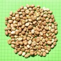 Faba-Beans-Whole-120x120
